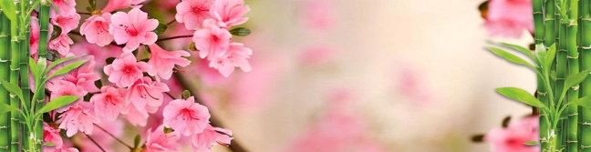 Spring Acupuncture Deal